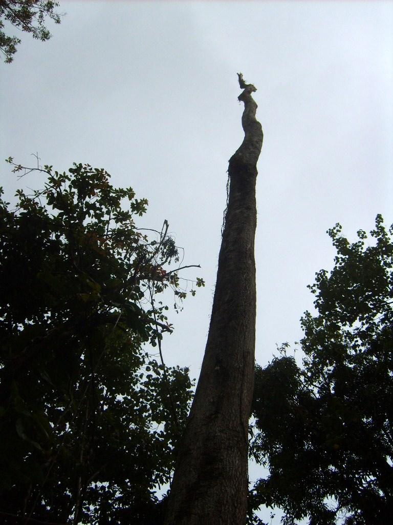 The David Tree